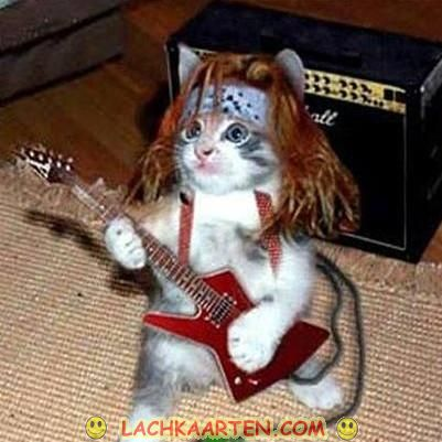 Metal Cat is in Da House